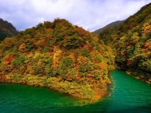 Postal: Frondoso bosque otoñal junto al agua