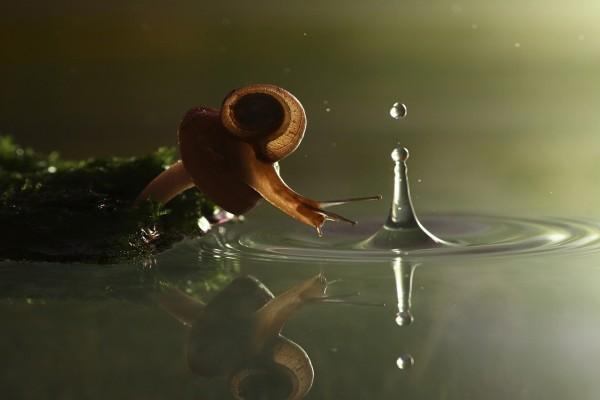 La caída del caracol