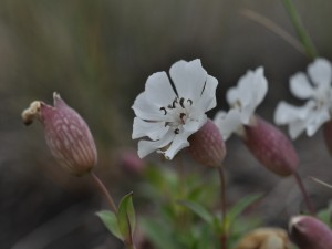 Postal: Bellas flores
