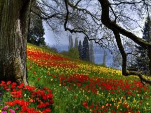 Hermosos tulipanes en un campo junto al mar