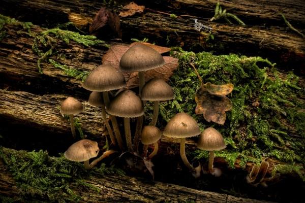 Setas creciendo en un tronco