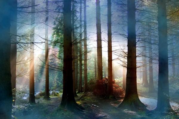 Interior de un bosque