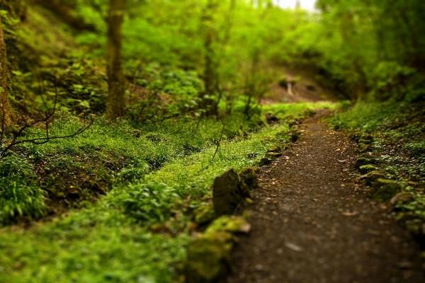 Sendero en un bosque verde