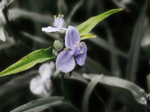 Postal: Preciosa flor de color lila