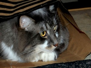 Postal: Gato escondido en una bolsa de papel