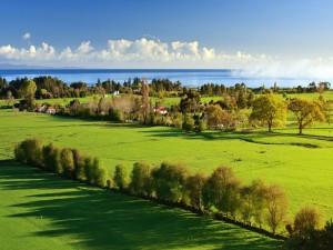 Prado verde junto al mar