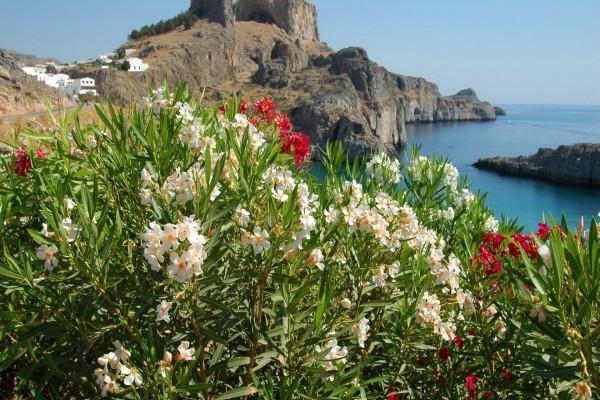Flores en la costa