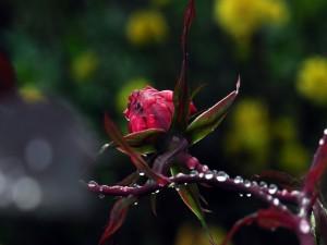 Gotas de agua sobre el tallo y pétalos de una flor