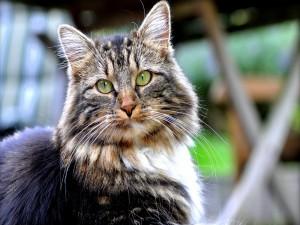 Postal: Un hermoso gato de largos bigotes