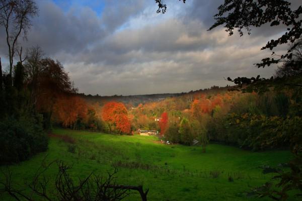 Árboles otoñales en un prado verde