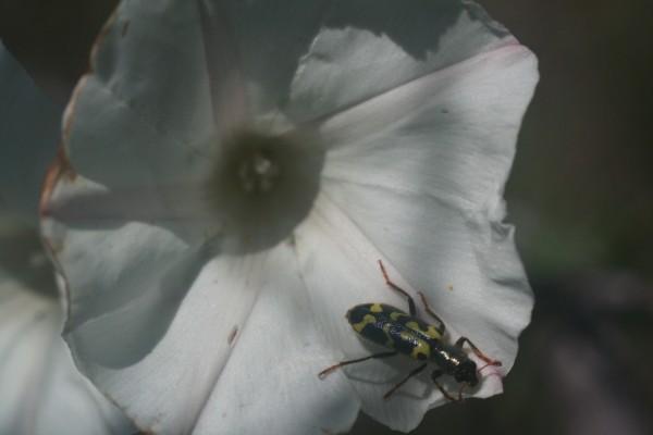 Insecto sobre una flor blanca