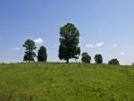 Árboles en un prado
