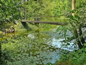 Puente sobre los nenúfares