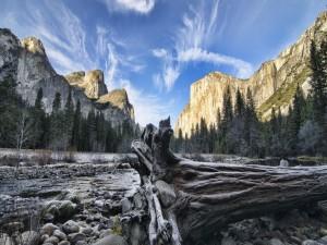 Postal: Árbol caído en el Parque Nacional de Yosemite