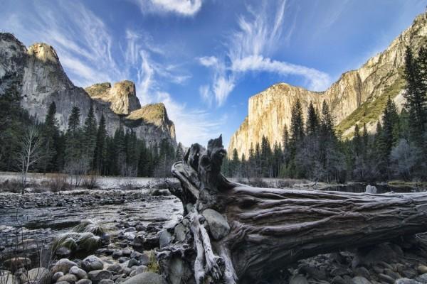 Árbol caído en el Parque Nacional de Yosemite