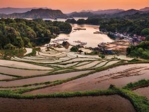 Campos de arroz cerca de las aldeas