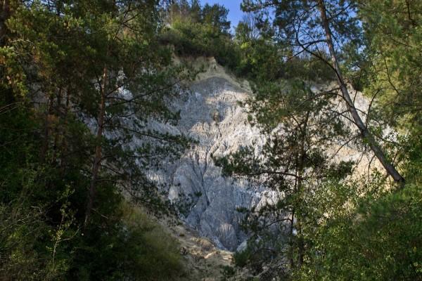 Montaña entre árboles