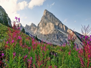 Postal: Montañas en primavera