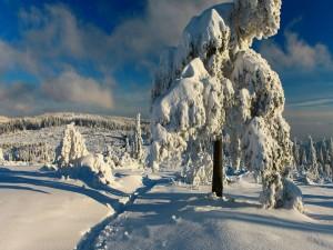 Postal: Bosque blanco bajo el cielo azul