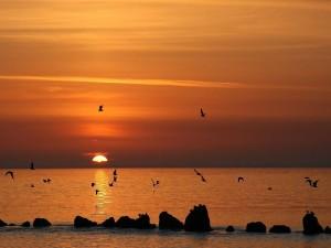 Puesta del sol tranquila y hermosa sobre el océano