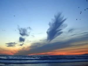 Nubes y aves sobre el mar