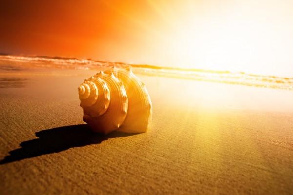 Hermosa concha sobre la arena de una playa