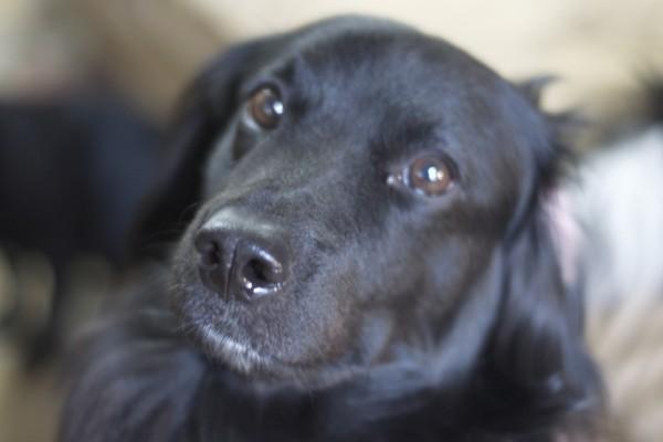 Un bonito perro negro