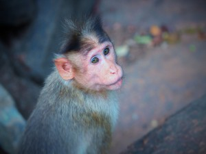 Postal: Un pequeño mono