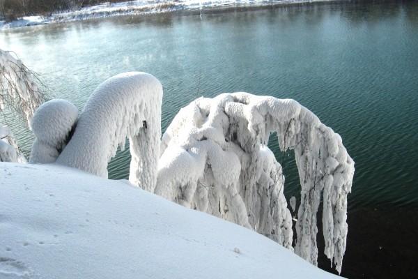 Ramas cubiertas de nieve junto al agua