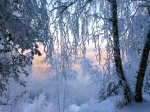 Postal: Ramas cubiertas de nieve junto a un lago