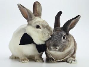 Feliz pareja de conejos
