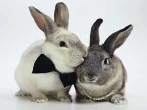 Postal: Feliz pareja de conejos