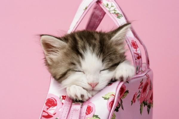 Gatito durmiendo dentro de un bolso