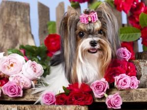 Una perrita Yorkshire Terrier entre flores