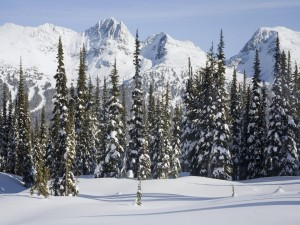 Postal: Pinos y montañas nevadas