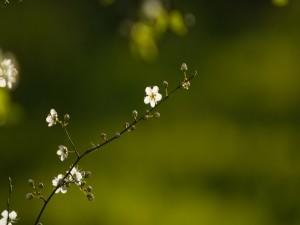 Pequeñas flores y brotes en una rama
