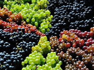 Varios tipos de uvas