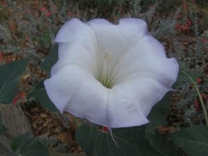 Flor blanca en una planta