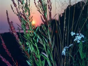 El sol del amanecer tras las plantas