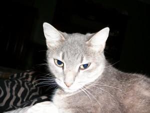 Un gato con la cara iluminada
