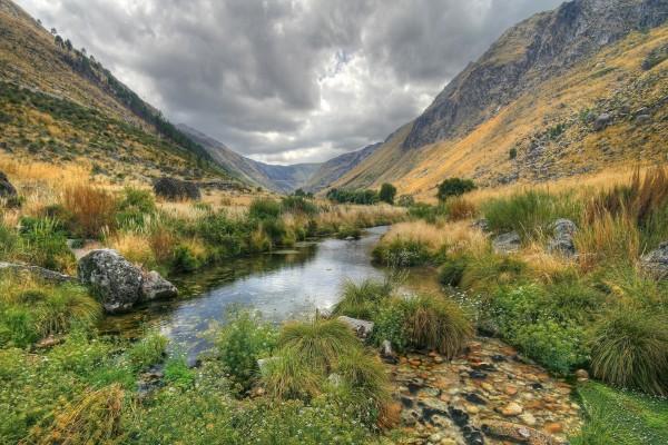 Plantas en un río