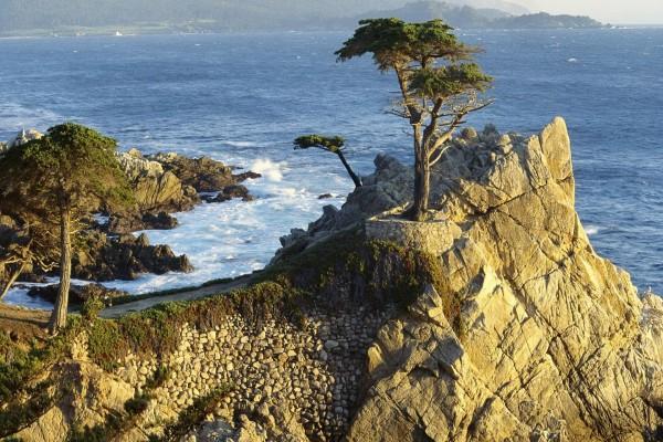 Árboles en unas rocas junto al mar