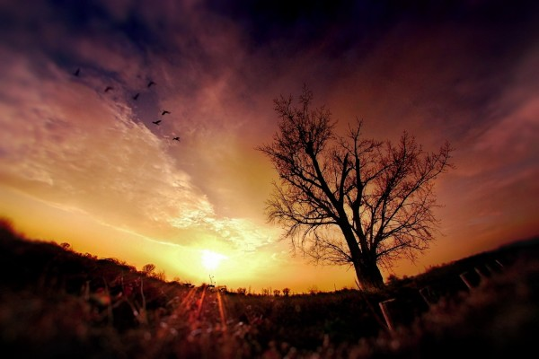 Aves volando al amanecer