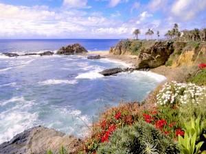 Palmeras y flores junto al mar