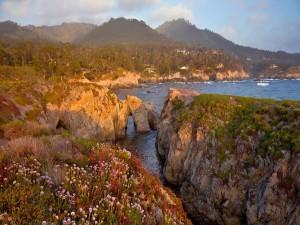 Flores sobre las rocas marinas