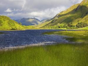 Postal: Lago rodeado de plantas verdes
