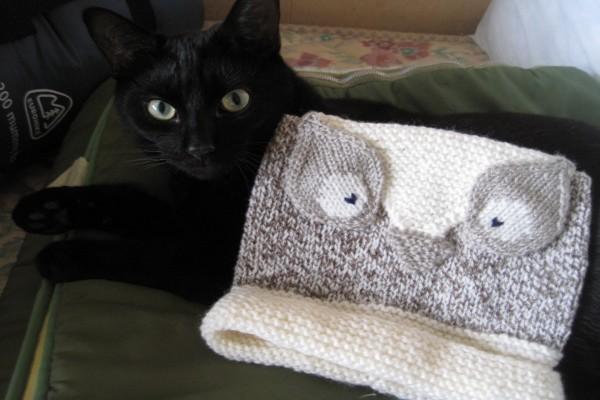 Gato negro junto a un bonito gorro