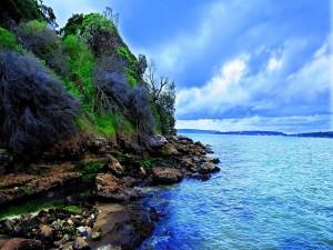 Arbustos y rocas en la costa