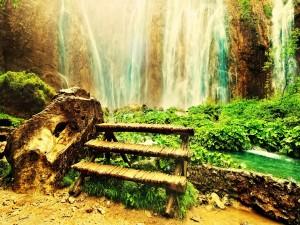 Plantas verdes bajo una cascada