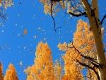 Otoño sobre los árboles